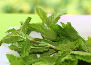 Mint-Cooking-with-herbs-390x279
